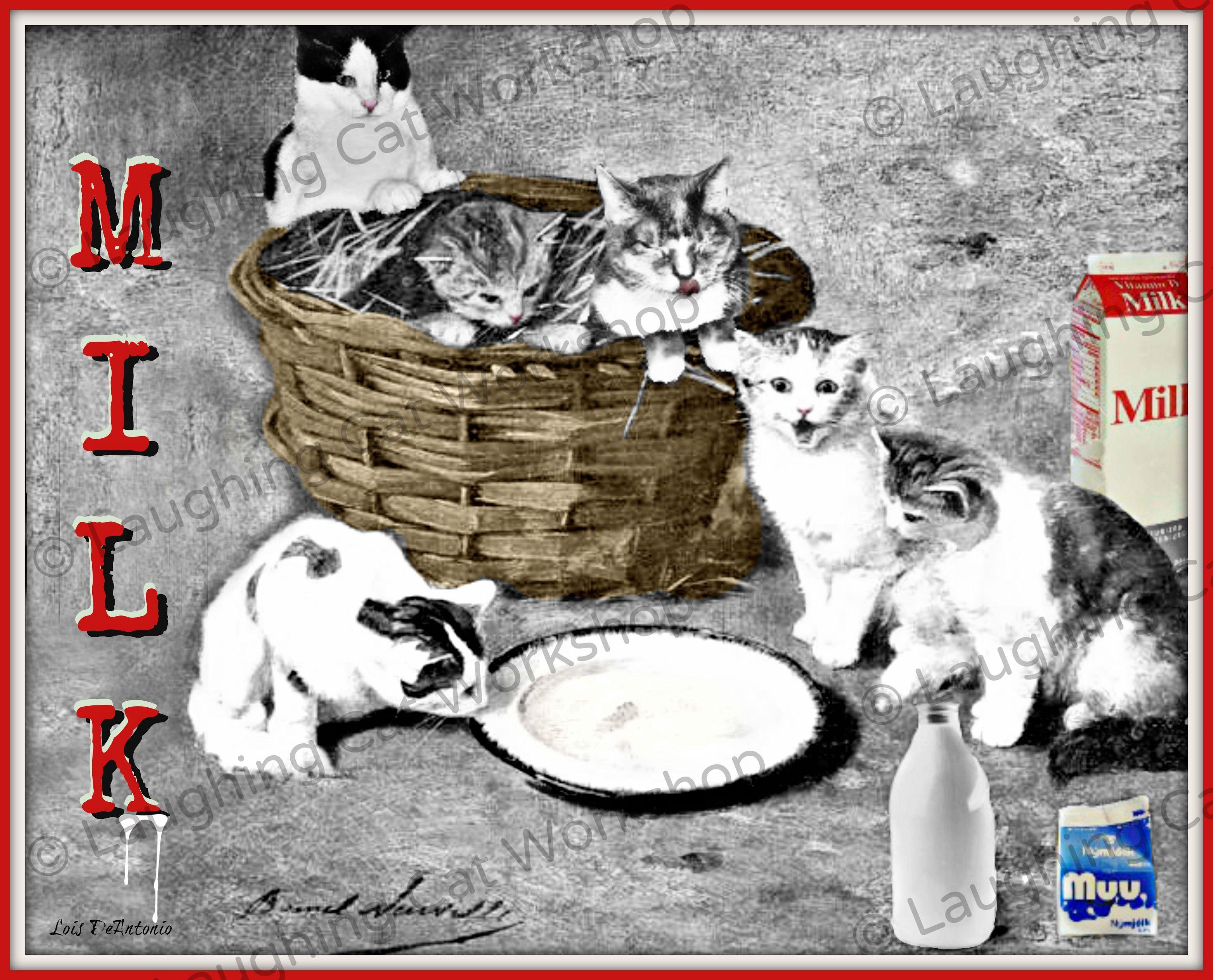 Meooow! NationalMilkDay milk Meow MilkDay drink
