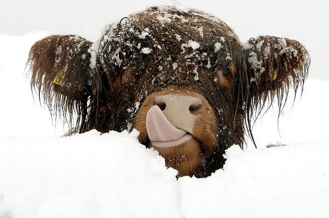 26 Animals That Are Having the Best Snow Day Ever | Pleated-Jeans.com