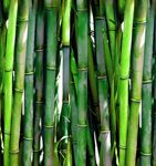 10 Survival Uses for Bamboo - http://theweekendprepper.com/do-it-yourself/10-survival-uses-for-bamboo/