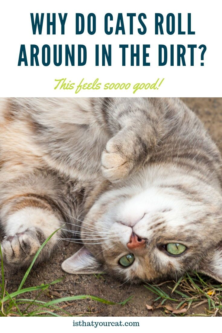 Top 7 Reasons Why Cats Roll Around In The Dirt Cat roll