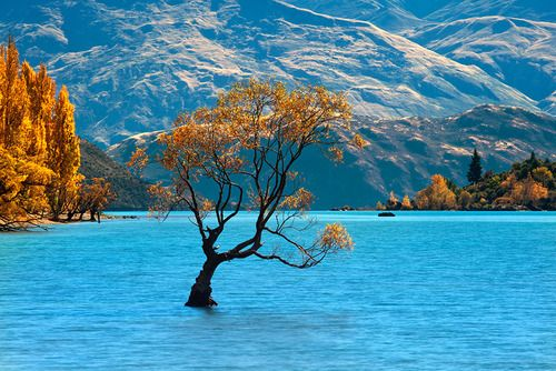 Solitude, Lake Wanaka, New Zealand  photo via describing