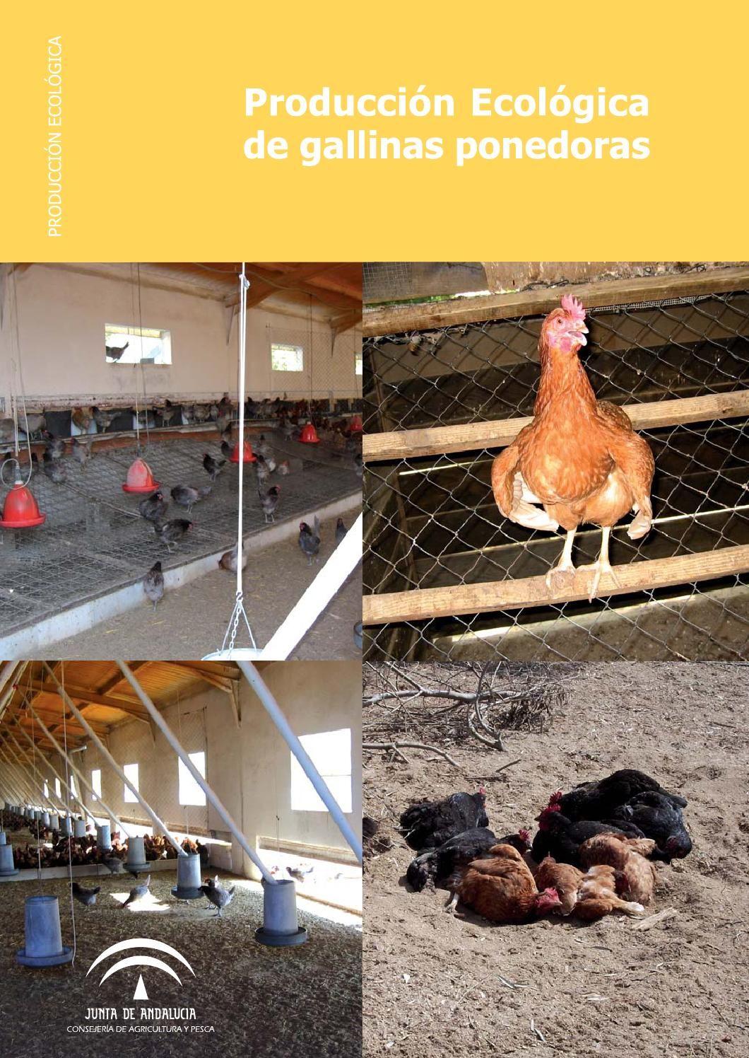 Producción ecológica de gallinas ponedoras
