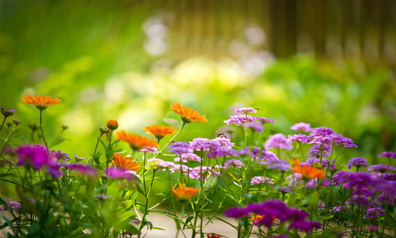 Flowers Wallpapers Free Download Hd Flower Wallpaper Pinterest