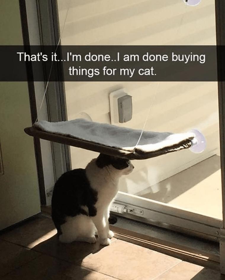 Cat Memes Clean Memes Cat Memes Clean Cat Memes Cats