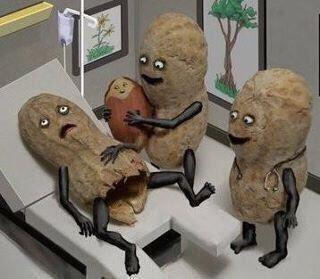 How Peanuts are born