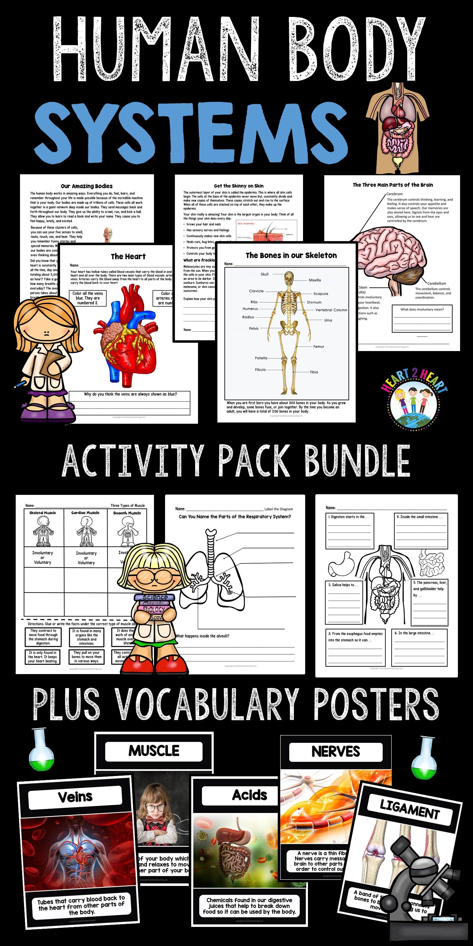 Human Body Systems Bundle Muscular Skeletal Digestive