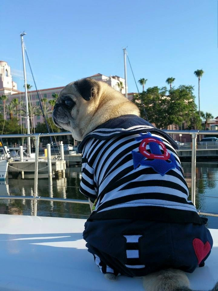 Tampa Bay Yacht Charter Tampa Bay Pug Rescue Yacht Charter