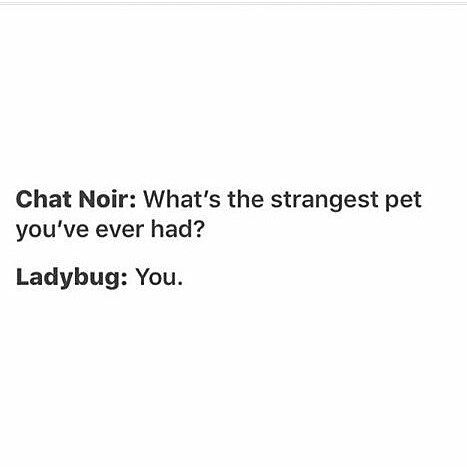 That is what I would say if I was ladybug