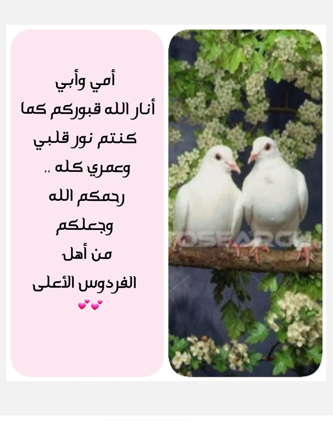 Pin By Eman Duniya On الأم الحبيبة