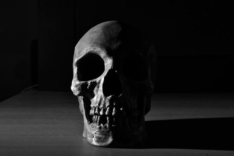 High Contrast Skull Photography Black And White