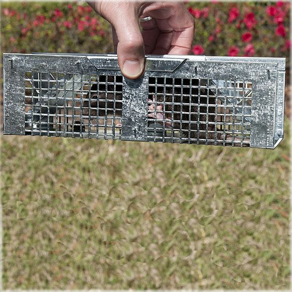 Extra Small 2 Door Live Mouse Trap For Mice Voles Humane Cage