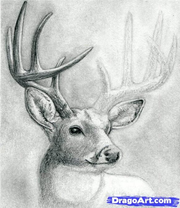 how to draw a deer head step by step