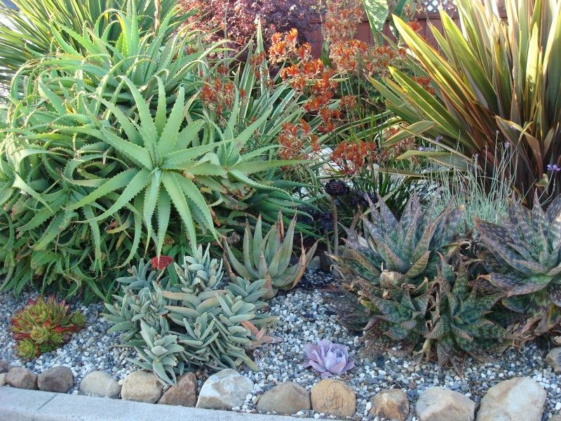 Succulent Garden Designs garden design with succulentcacti gardens on pinterest succulents garden with pumpkin plant pictures from Garden Designers Roundtable Celebrating Regional Diversity