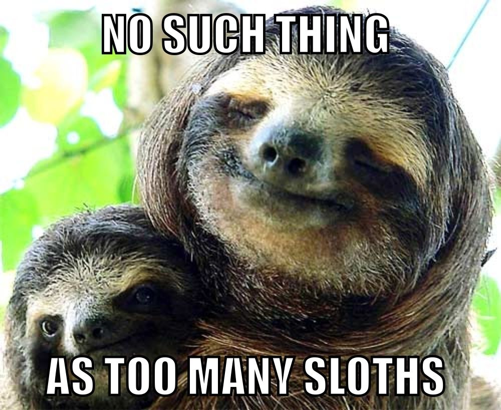 i am sloth It's not that i dislike sloths quite the opposite really if you were going to compare them to, say, a bot-fly, a sloth would win hands down.