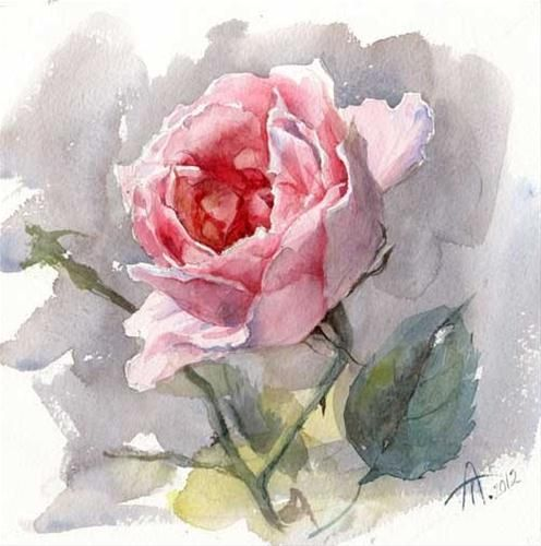 Pink rose original fine art for sale anna for Pinterest aquarell
