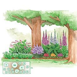 Pre-planned garden designs and layouts: Shade Garden Plans A ... on