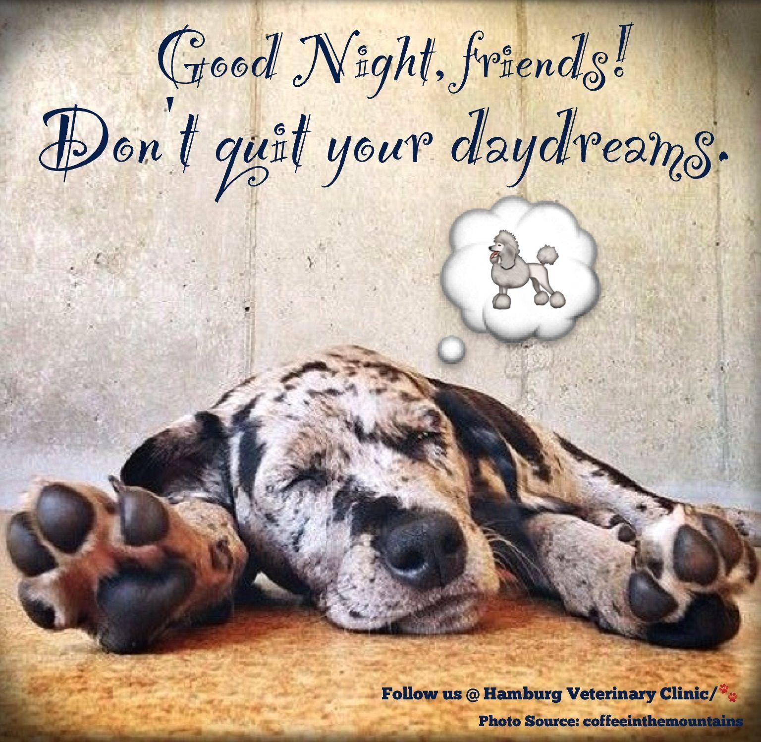 Good Night Dreams Animal Humor Cute Dog Sleep