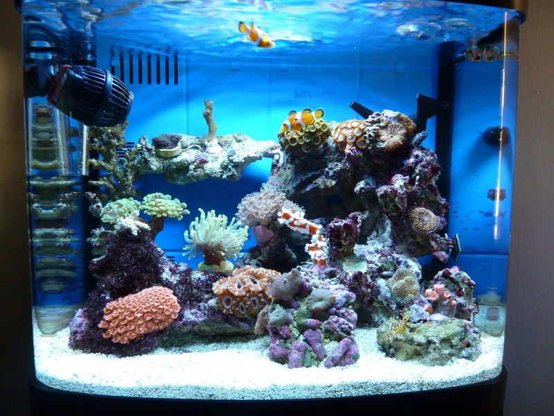 New To Marine Interpet River Reef 94l Nano Tank Page 2 Ultimatereef Com Saltwater Aquarium Beginner Saltwater Aquarium Coral Reef Aquarium