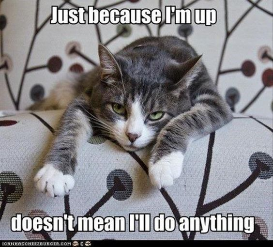 Cats Taking Laziness To A Whole New Level (Memes)
