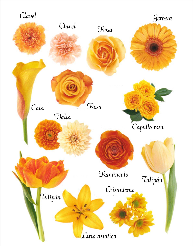 Los naranjas son colores que dan exuberancia a las - Clases de flores amarillas ...