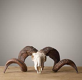 Horns & Antlers | Restoration Hardware