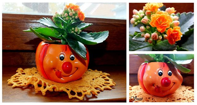 Flower in pumpkin pot