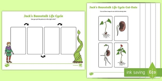 Jack S Beanstalk Lifecycle Activity Sheet Jack And The