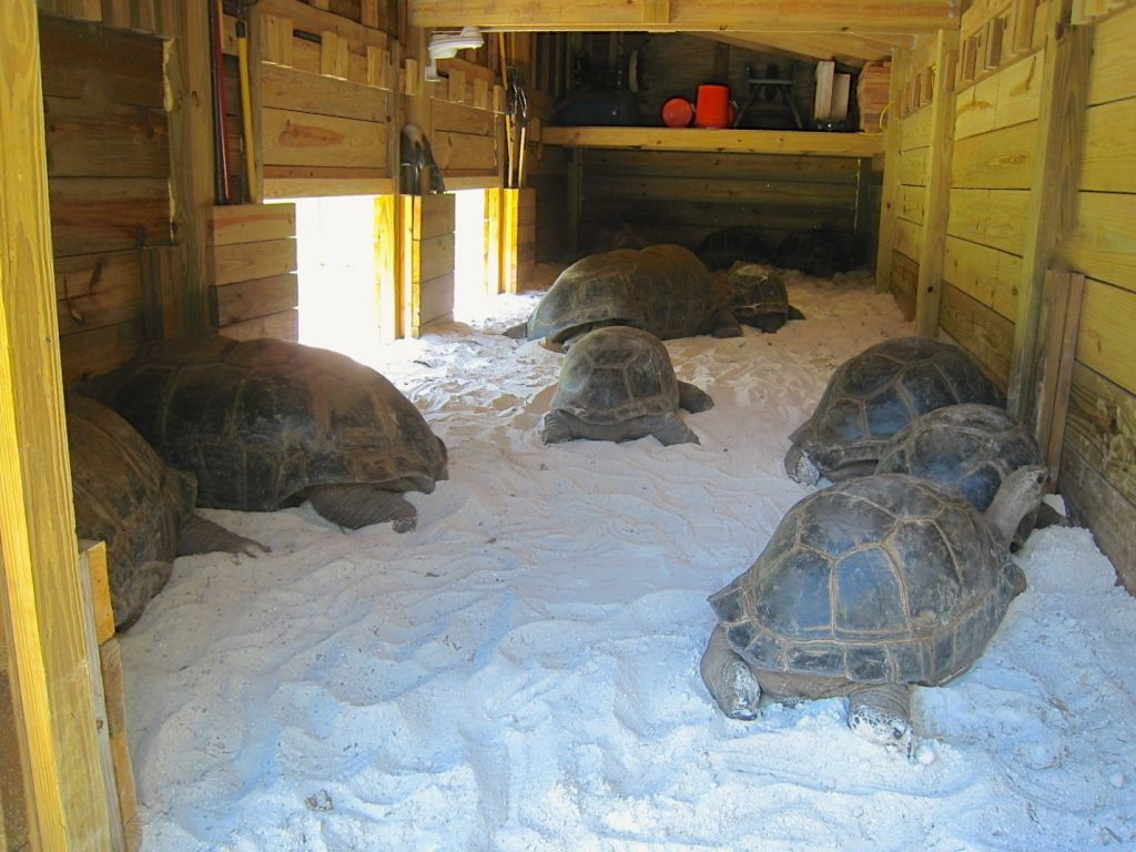 interior of tortoise enclosure they look like they could use some 39 beds 39 in there like this. Black Bedroom Furniture Sets. Home Design Ideas