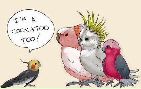 Hiiii Que Cuquitoooo Pajaros Pequenos Pajaros Australianos Aves Pajaros