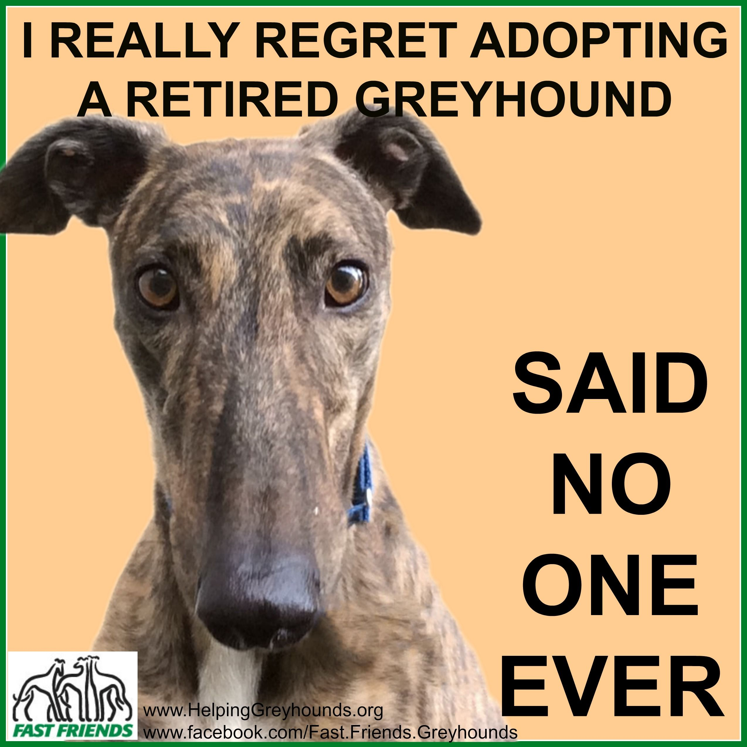 So True The Model In The Picture Is Kenny Who Is One Of Our Adoptable Greyhounds Greyhound Greyhound Adoption Greyhound Rescue