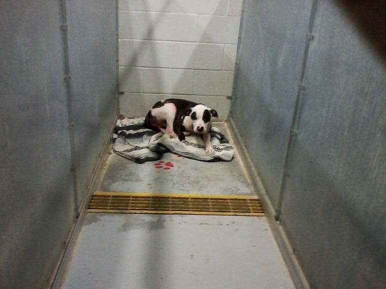 19++ Catoosa county animal shelter images