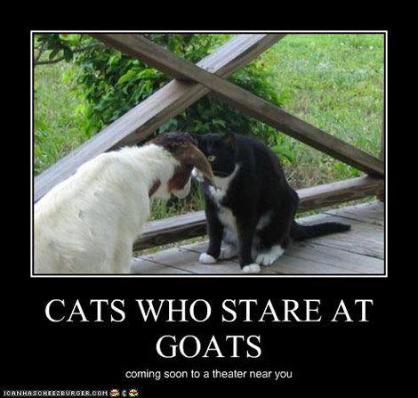 #goatvet thinks this B...