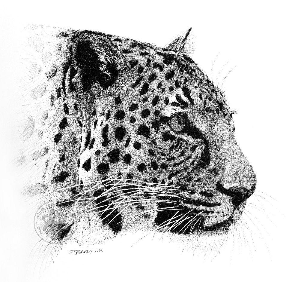 Snow Leopard Google Search Katten Tekening Schilderen Ideeen Dieren