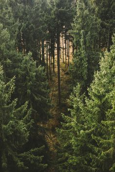 Via natureac http://natureac.tumblr.com/post/127366076933/nature-blog