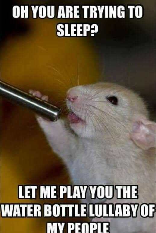 15 Funny Hamster Memes To Get You Through Friday Funny Rats Cute Hamsters Baby Hamster