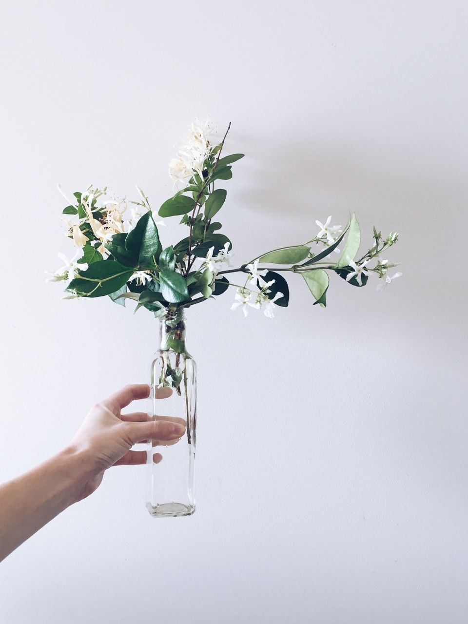 Simple arrangement g r o w pinterest jasmine flowers and flora simple arrangement izmirmasajfo