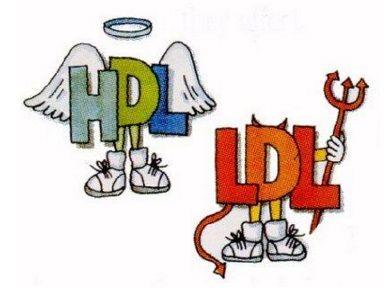 Conheça as diferenças entre o HDL e o LDL | Emagrecer Fácil