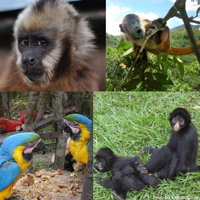 Care For Rescued Wildlife at La Senda Verde at The Rainforest Site