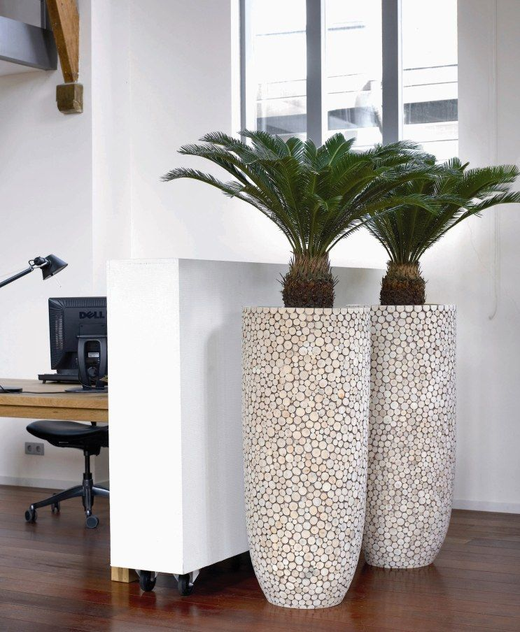 Nursery Indoor Plants Near Me: Look At These Amazing Planters, Fitted With Round Peeled
