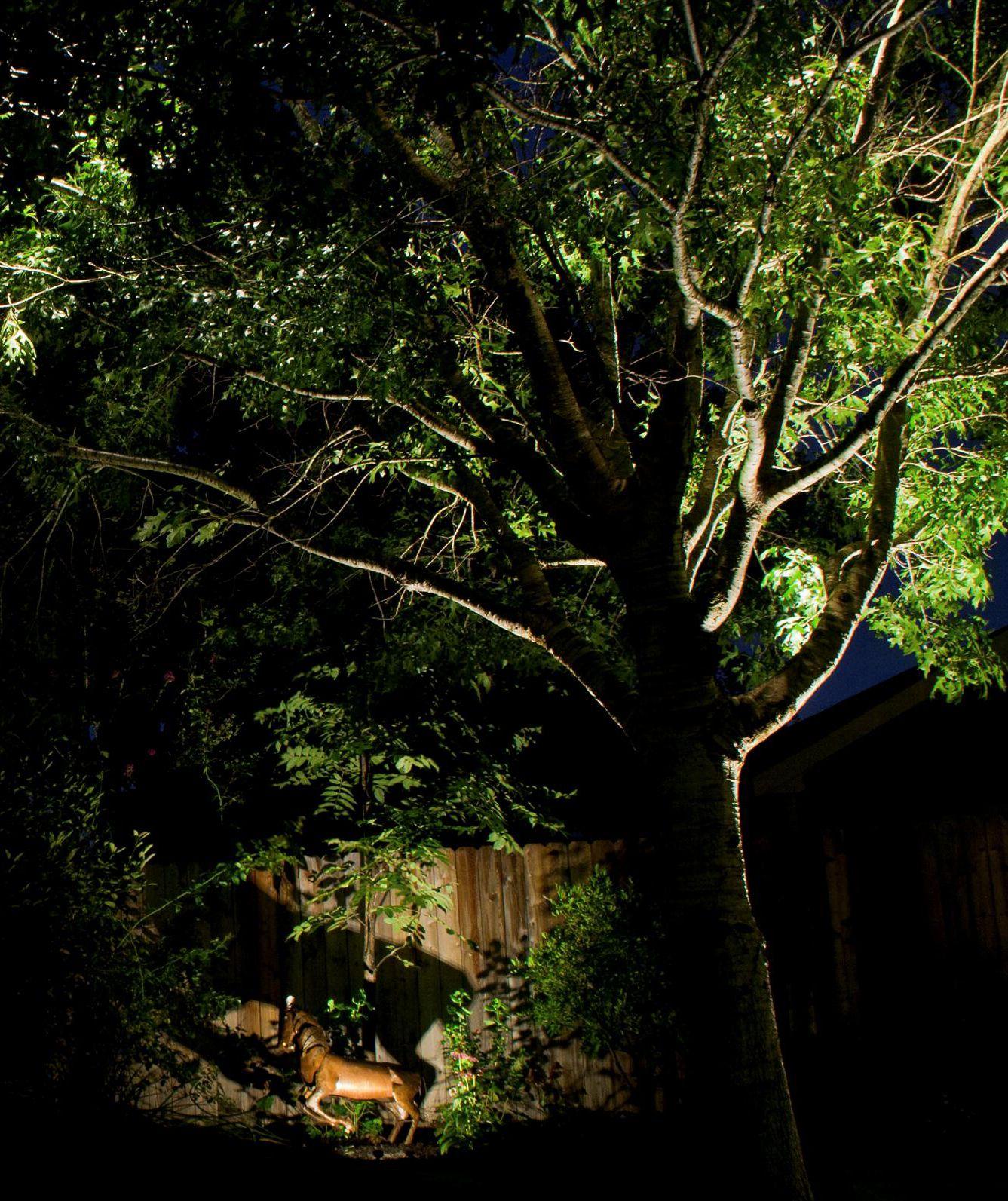 Led Outdoor Landscape Lighting In Central Texas By Www Night Scenes Com Landscape Lighting Led Outdoor Landscape Lighting Outdoor Landscape Lighting