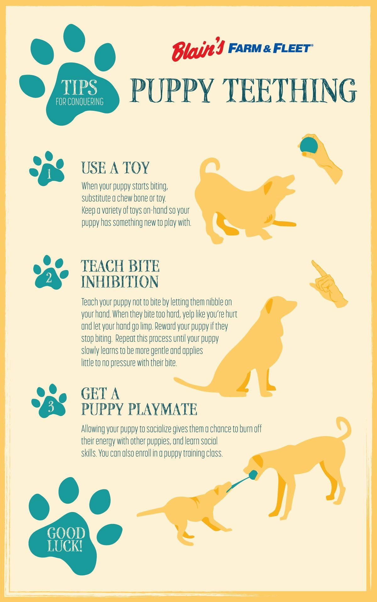 Is Your New Puppy Teething Help Her Feel Better And Keep Your Shoes From Becoming Chew Toys With These Tips Puppy Teething Puppy Training Puppy Training Tips