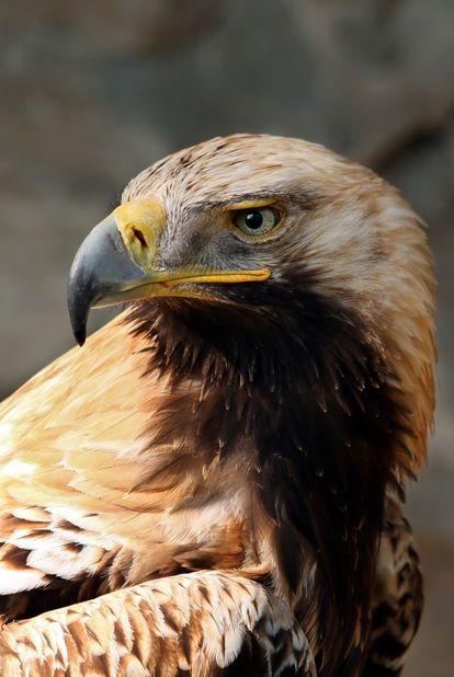 鷹】猛禽類【鷲】は素晴らしい!写真、画像ギャラリー - NAVER まとめ ...