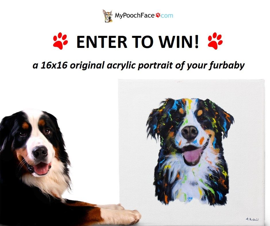 Please Help Me With This Awesome Competition From Mypoochface Pet Portraits Diy Dog Stuff Dogs