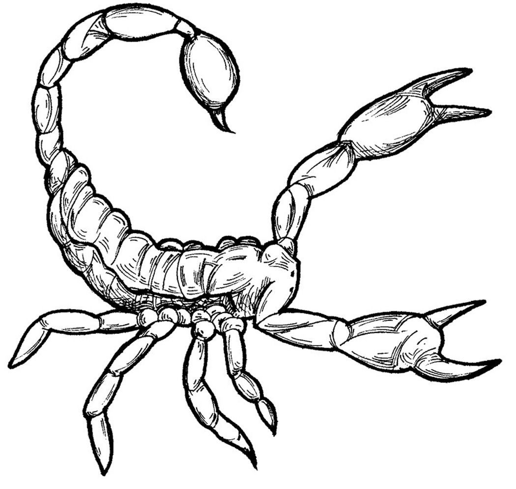 Free Printable Scorpion Coloring Pages For Kids Animal Coloring