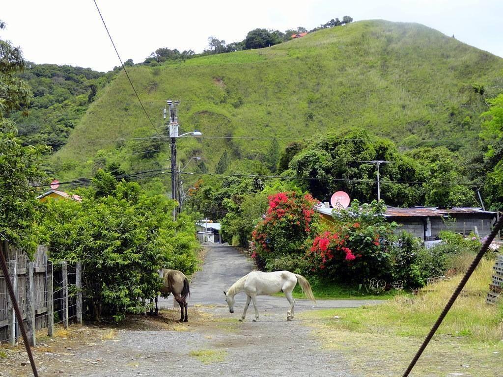 #horses and #nature - #Boquete #Chiriqui #Panama
