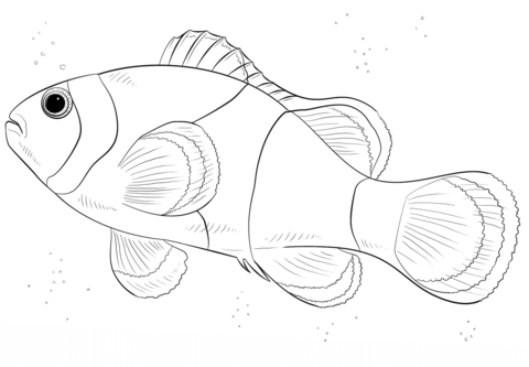 Clown Fish Coloring Page From Clownfish Category Select From 27606 Printable Crafts Of Cartoons Nature Fish Drawings Fish Coloring Page Animal Coloring Pages