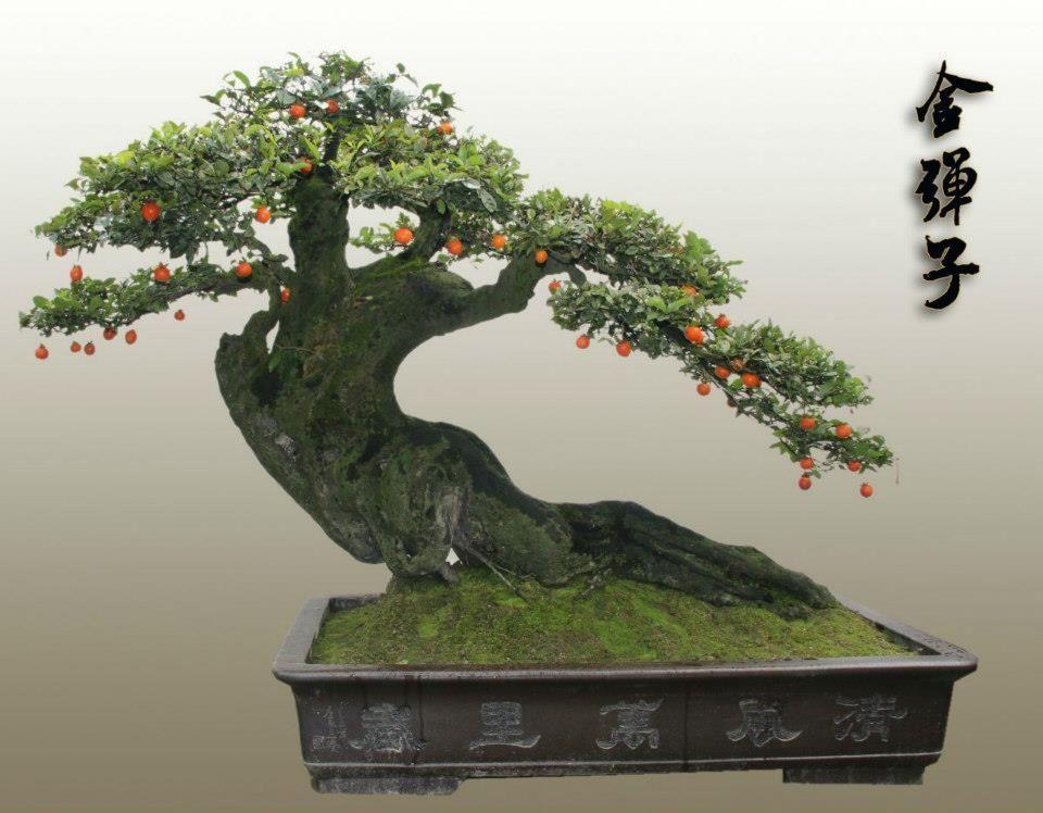 bonsai bonsai pinterest bonsai ikebana and plants. Black Bedroom Furniture Sets. Home Design Ideas