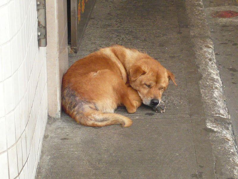 Sleeping Dog Cute Animals Doggy Animals