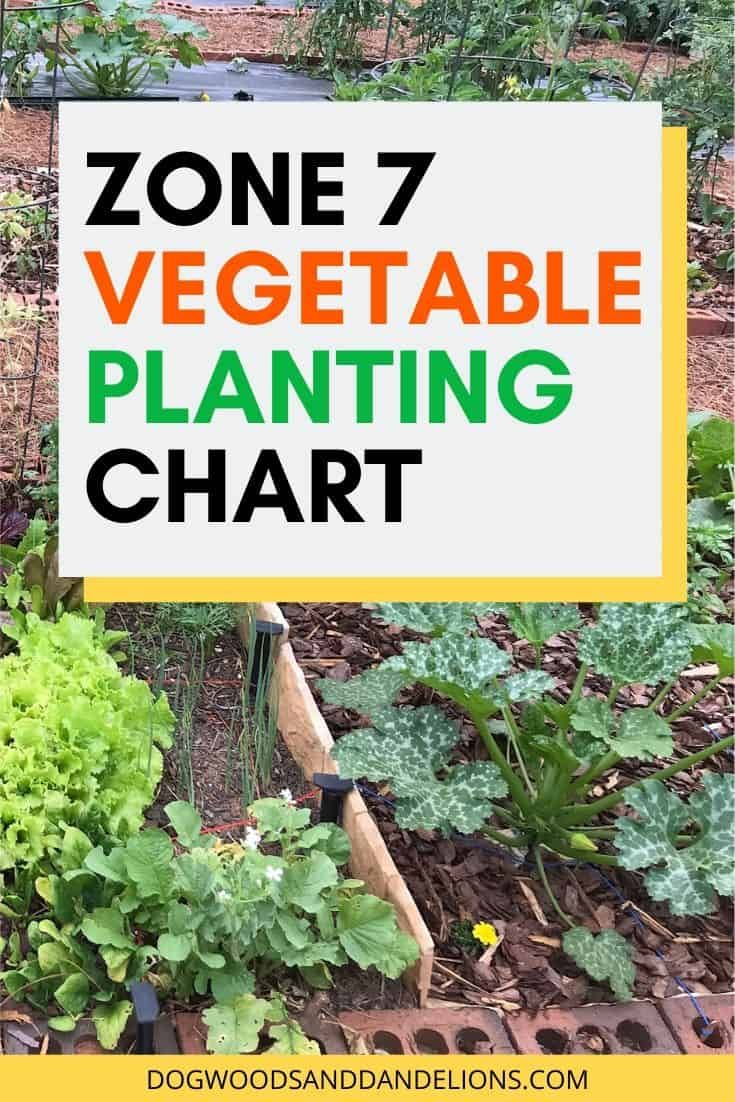 Zone 7 Vegetable Planting Chart | Planting vegetables ...