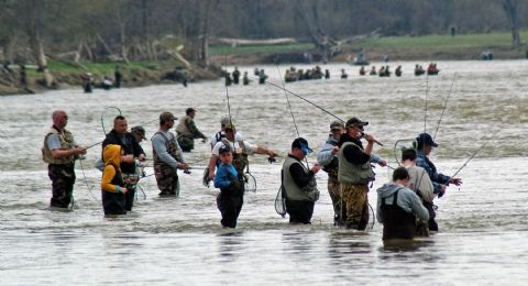 Walleye run on the maumee river fishing pinterest for Maumee river fishing